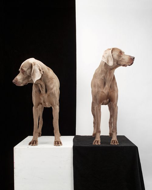 Love... William Wegman