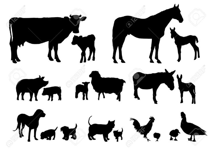 Baby Farm Animals Clip Art 257 best * farm animal silhouettes, vectors, clipart, svg