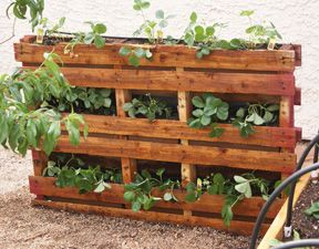 I wonder if you could use this as a retaining wall? Strawberries planted within an old pallet.