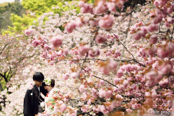 マシュマロ桜と和装で前撮り |*ウェディングフォト elle pupa blog*|Ameba (アメーバ)