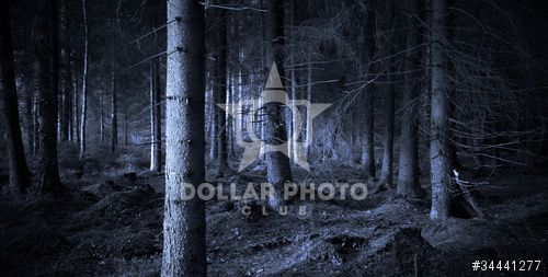 http://www.dollarphotoclub.com/stock-photo/Spooky forest/34441277 Dollar Photo Club millions of stock images for $1 each