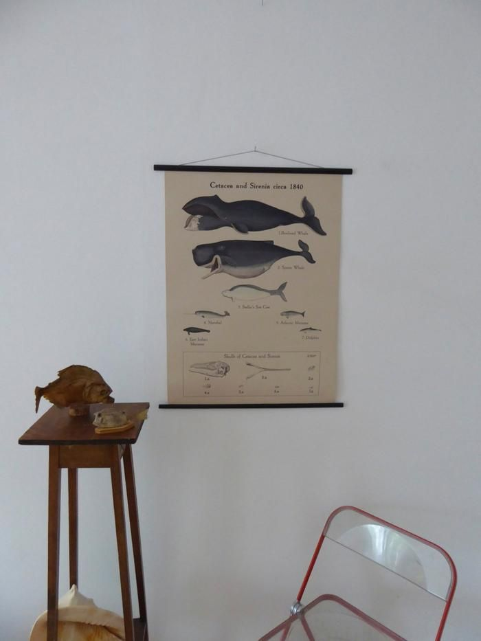 "Large A1 (25"" x 33"") Moby Dick School Chart - Narwhale Poster - Steller's sea cow - Bow Whale and Sperm Whale Poster - Antique Style"