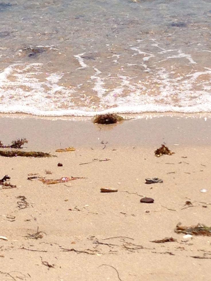 Australian beaches are clean & serene - Dromana - Victoria. Australia.