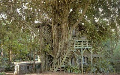 part of the landscape, so organic: Treehouses Way, Treehouse Banyan, Amazing Treehouses, Awesome Treehouses, Treehouses I D, Trees, Tree Houses Play