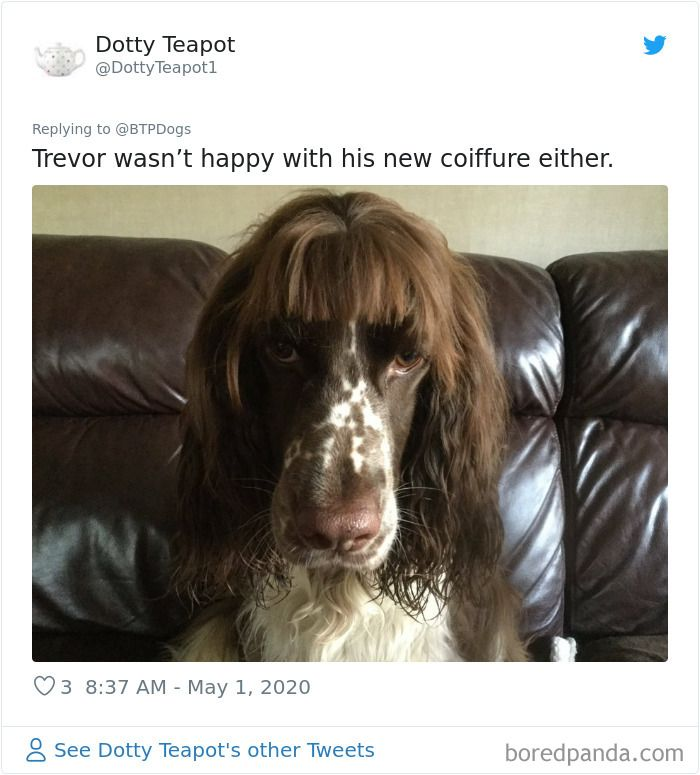 30 Times Quarantined People Tried Grooming Their Dogs And Realized What The Professionals Are For In 2020 Dog Haircuts Dog Grooming Pets