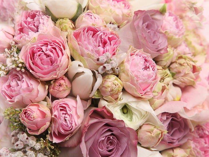 10 Foto Wallpaper Bunga Mawar Pink Wallpaper Bunga Mawar Pink Indah Hd Unduh Gratis Download Romantic Flowers Roses Peony Wallpaper Pink Peonies Wallpaper