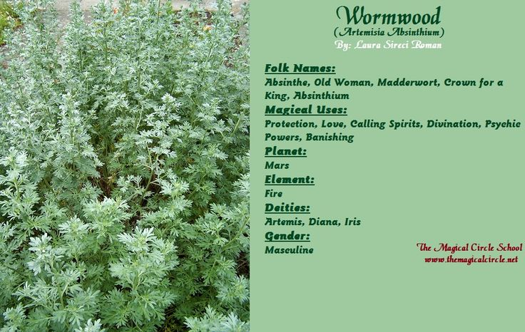 Wormwood Magical Properties - The Magical Circle School - www.themagicalcircle.net
