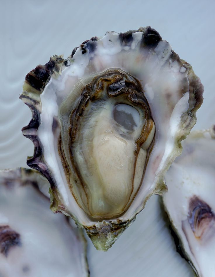 World Oyster Day - Fanny Bay Oysters