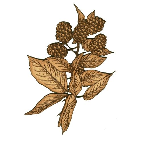 Blackberries & Leaf Sprig MDF Wood Shape