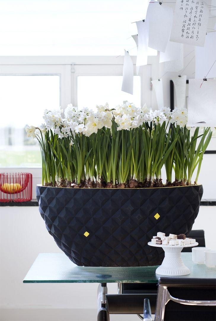 Groen wonen | De Narcis brengt het voorjaar in huis - Woonblog StijlvolStyling.com (Daffodil plant & flowers)