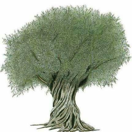 The holy tree !