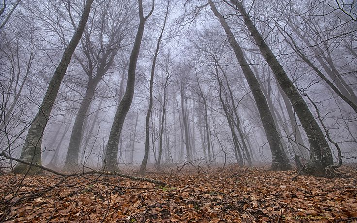Landscape, Photography, Greece, Olympus, Forest, Fog, Trees, Leaves