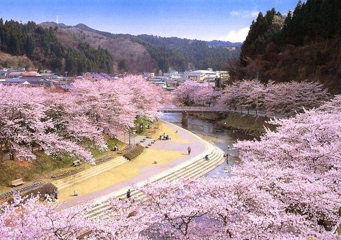 「石川町の桜」 母畑温泉周辺の観光スポット