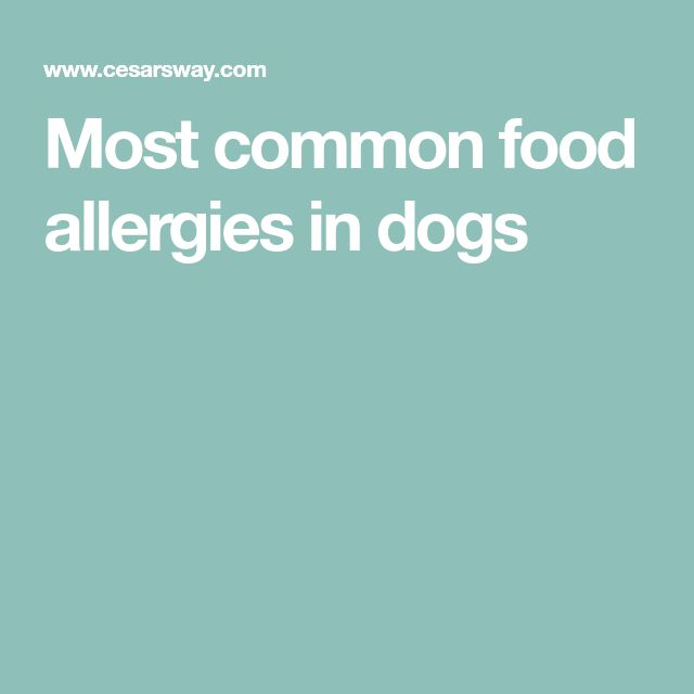 Most common food allergies in dogs