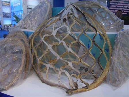 Great eel net