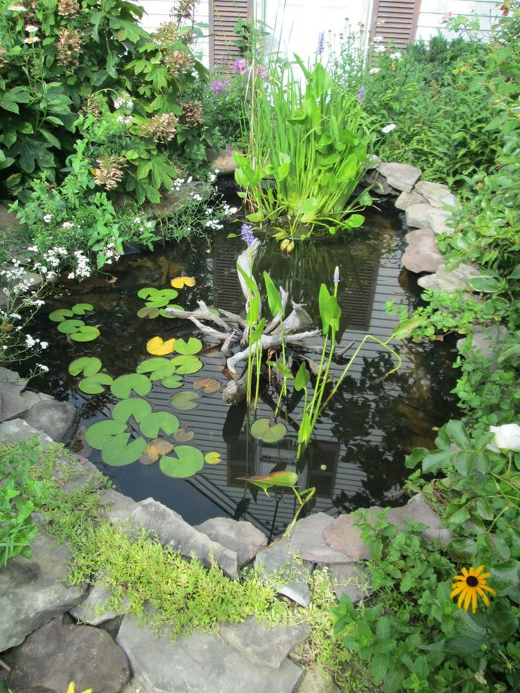17 Best Images About Wildlife Ponds On Pinterest Gardens