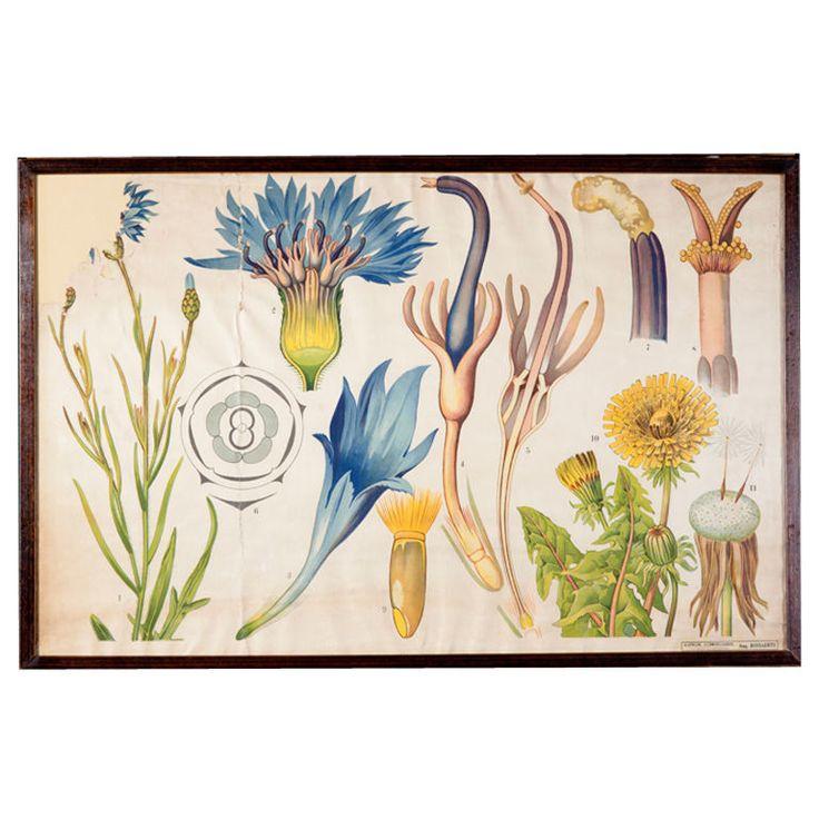 Belgian Botanicals from botany classroom - 1930