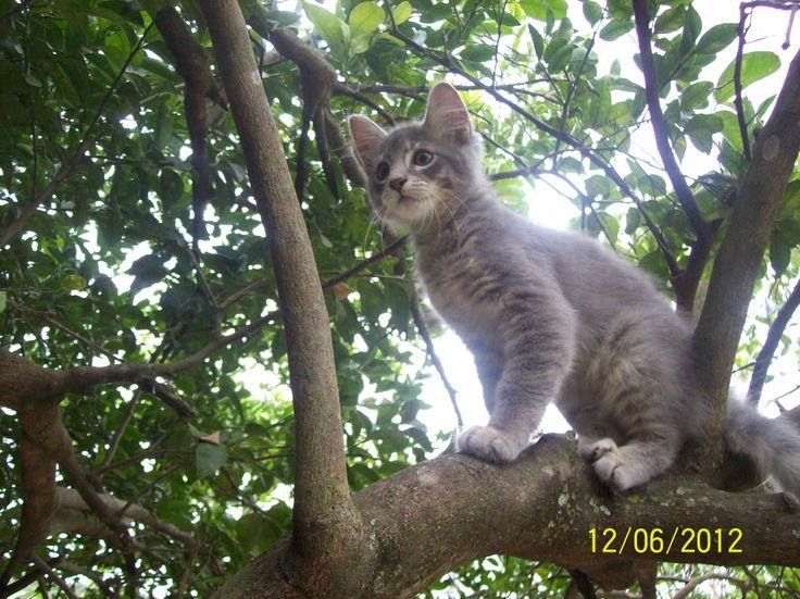 árbol 2