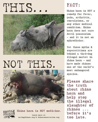 95 best Quotes : poaching (elephants, rhino...) images on ...