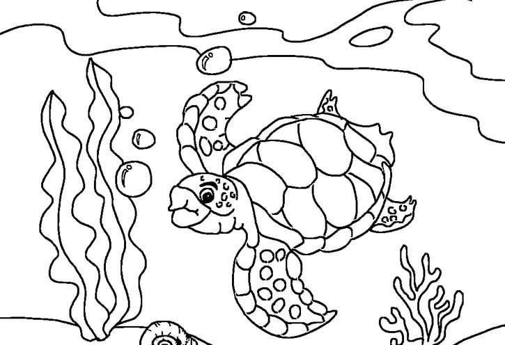 Printable Turtle Coloring Pages In 2020 Ocean Coloring Pages