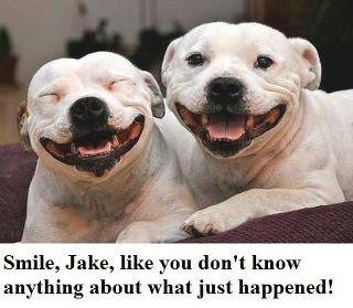 Love this!  :)Happy Face, Pitbull, Smile Dogs, Funny, Pit Bull, Happy Dogs, Doggie Smile, Happy Puppies, Animal