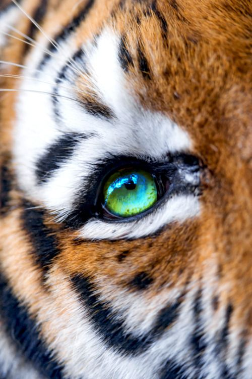 The Eye of Elena | vividessentials