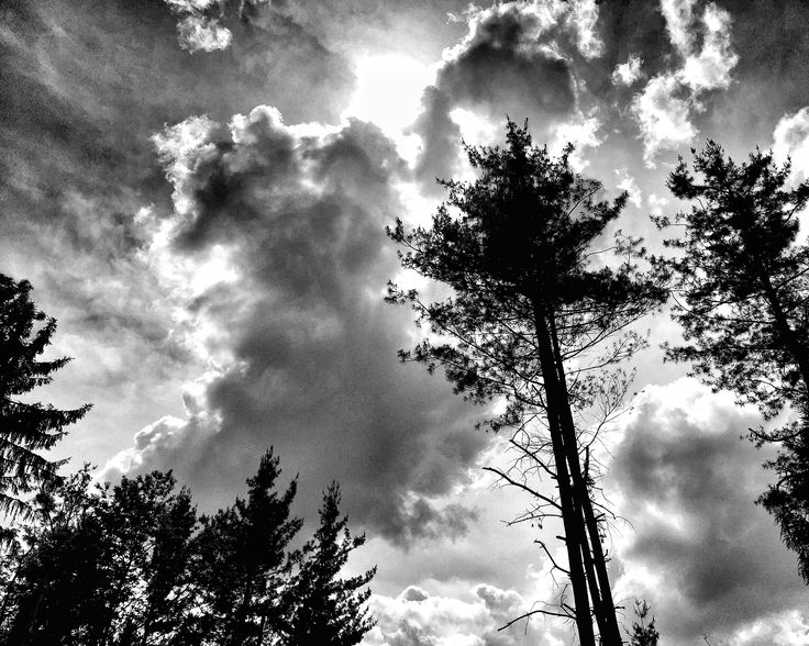 """In the forest 3  """"Sharing is giving without losing"""" #PietroParodi #blackandwhite"""