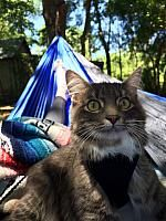 enos must not be for cats