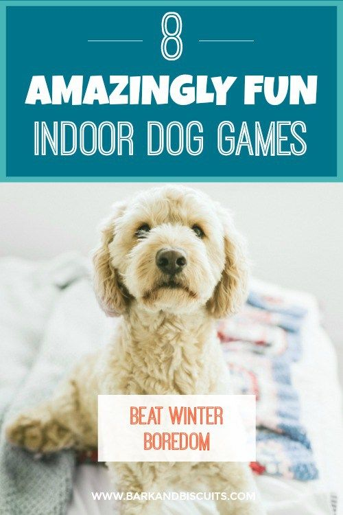 Indoor Dog Games: 8 Amazingly Fun Games To Play In The Winter #dogpuzzle #doggames