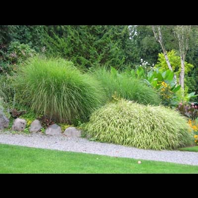 Ornamental Grass Garden Plan 633 best ornamental grasses and other tall andor bushy plants and ornamental grass workwithnaturefo