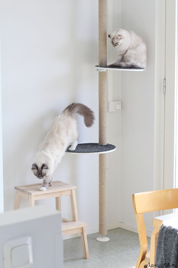 Ikea Cat Tree Best 25+ Ikea Cat Ideas On Pinterest | Ikea For Pets, Cat