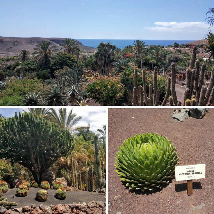Oasis Park, Fuerteventura Canary Islands, Spain