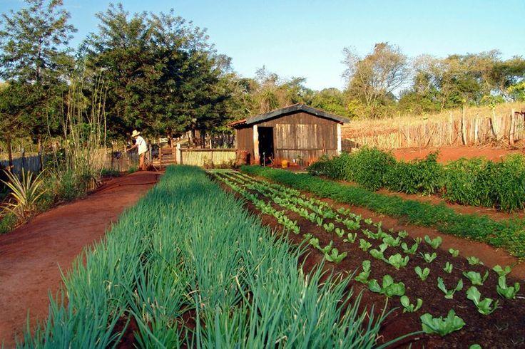 Brasil: agricultura familiar