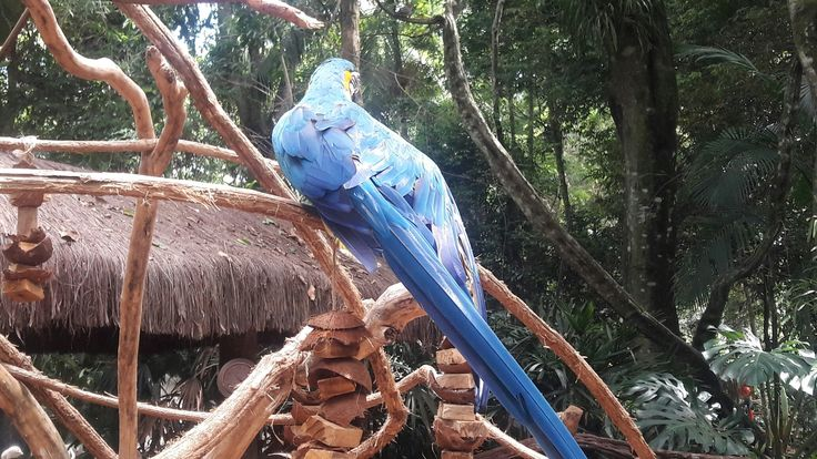 Parque aves