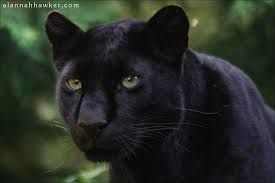 black panther - Google Search