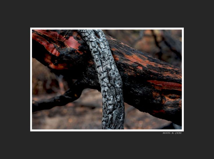 BURNT TREE by moonchae71