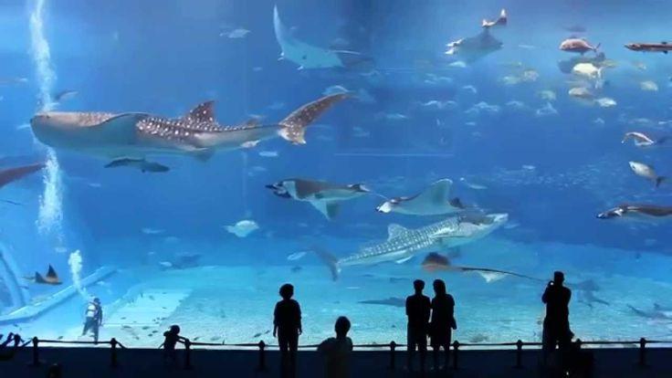 Самый большой в мире аквариум Невероятное зрелище...