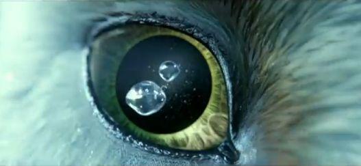 Soren - Guardians of Ga'Hoole Wiki