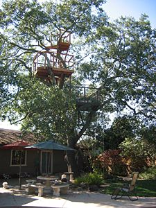 My current treehouse, in Sonoma, CA: Roy Tennant, Multilevel Sonoma, Current Treehouse