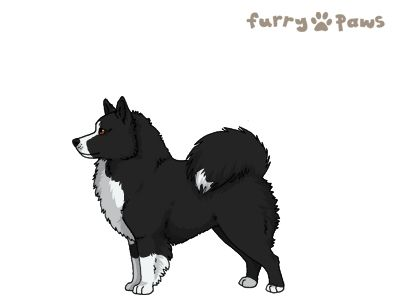 Furry Paws // WCH Kip's Kiparluoto [2STM 20HH 1.598] 9.3 554's Kennel