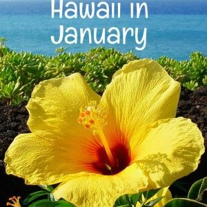 Is January the perfect time for your Hawaii vacation? Let's look at all the important factors — weather, costs, crowds and events — to help you decide. What's the weather like in Hawaii in January? Hawaii's weather is warm year round — even in the middle of winter. Hawaii's weather...