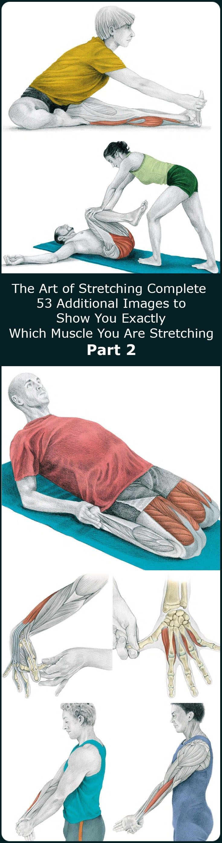 In our previous article The Art of Stretching we presented 36 illustration in color with stretches for specific muscles and following that we started.