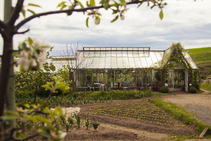 mandelmanns garden