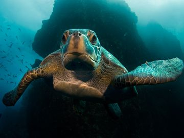 I would like to try underwater photography...I HAVE to see one of these turtles...I wonder if I'd get sick under the water, like I did on top of the water while snorkeling?????