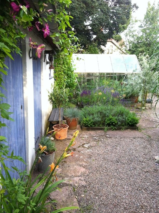 Min innergård med clematis, buxbom o lavendel