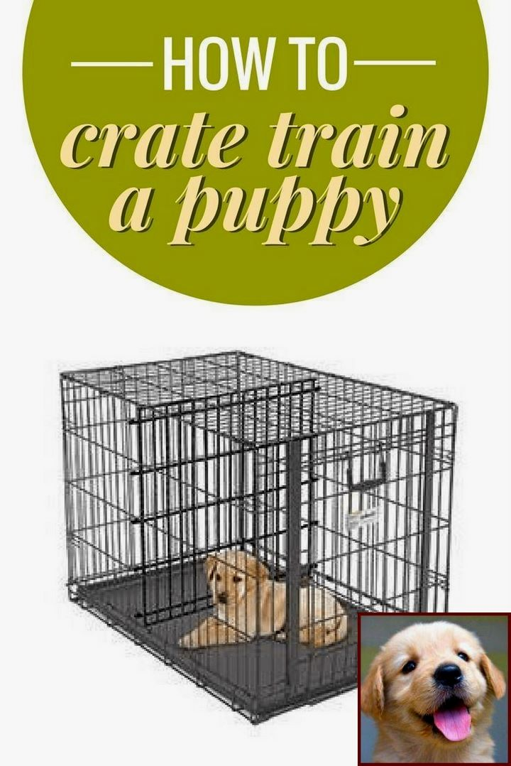 1 Have Dog Behavior Problems Learn About House Training A Puppy Without Crate And Clicker Trainin With Images Puppy Training Dog Behavior Problems Dog Training Obedience