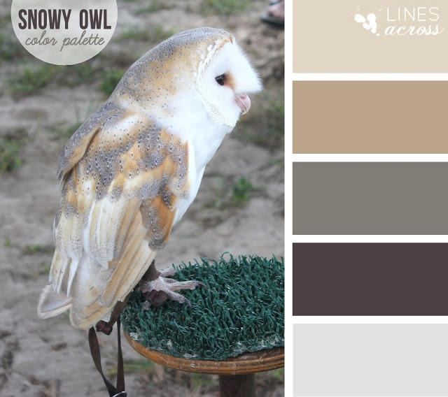 Color Inspiration in nature - Snowy owl color #palette #owl #neutral