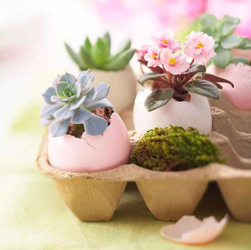 Pastel painted egg shell planters. Nice Easter gift.