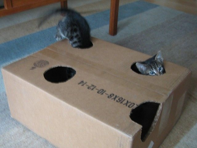 Got a kitten – or even a cat? Here's the best toy ever. All you need is a box cutter and a box. #cat #kitten #CatToy
