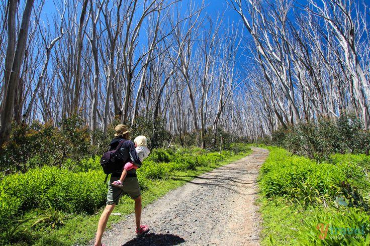 Hiking to Lake Mountain, Marysville, Victoria, Australia